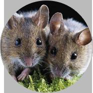 延安鼠类防治