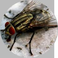 延安蚊蝇防治